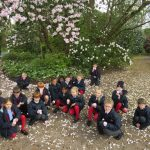 Year 3 Amongst the Blossom