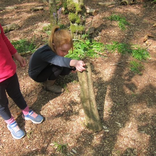 Hunting for minibeasts in Nower Wood