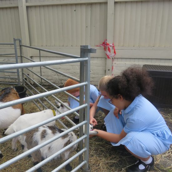 The girls get friendly with the goats