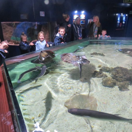 Meeting the Stingrays