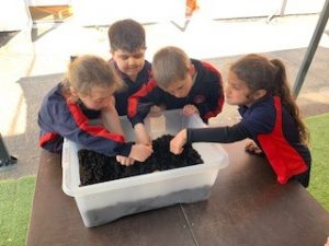 Year 1 Planting Potatoes