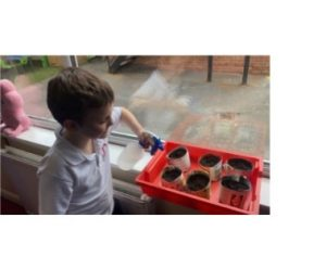 Year 2 hoping their sunflowers will sprout soon