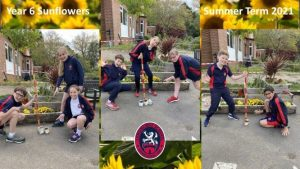 Year 6 are very excited about watching their flowers grow